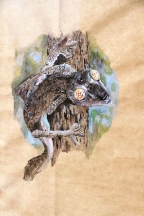 Leaf-tailed Gecko spp. (2012)
