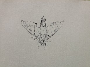 Moth, Colombia 2014